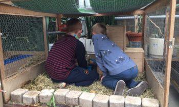 Lasten kesäiseen lomaviikkoon eläinten hoitoa ja rapsuttelua, pientä viljelyä, m…
